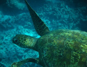 Pacific_Turtle_Conservation_Michael_White004