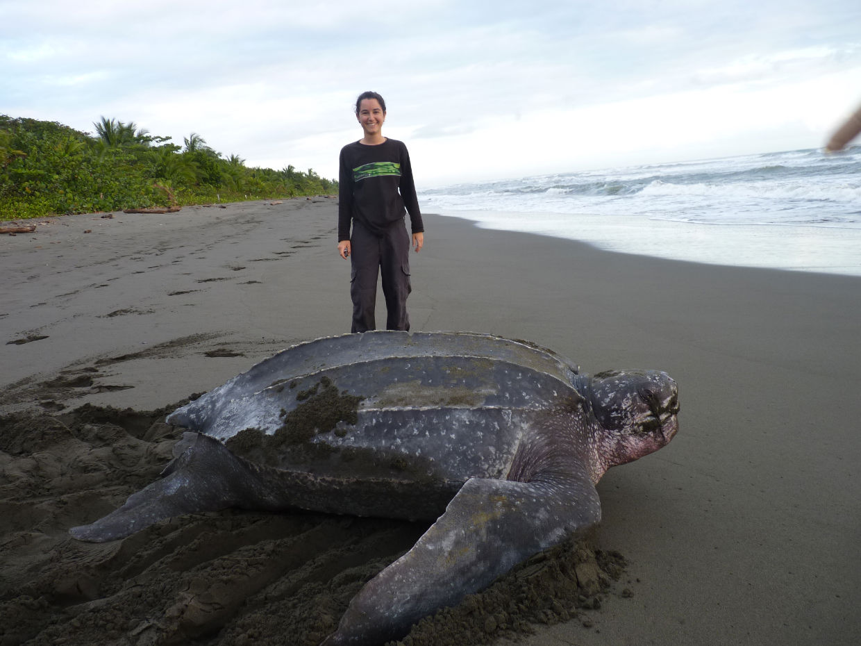 Roc 237 O Valent 237 N Gamazo Sea Turtle Conservation In Costa