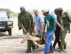 Ali and vets moving hirola from a chopper into the sanctuaty