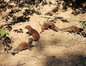 Mongoose group
